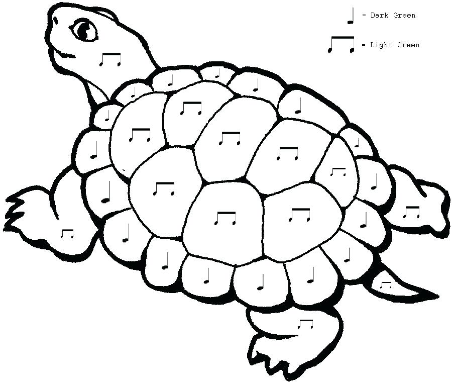 900x762 Tortoise Coloring Page Check Out New Work On My Portfolio Dim Sum