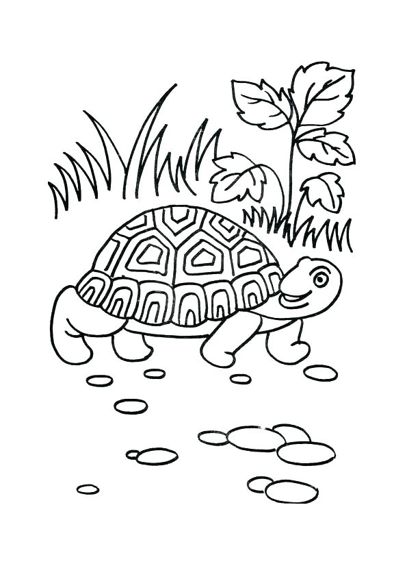 595x842 Tortoise Coloring Page Coloring Pages Turtle Printable Of Cartoon