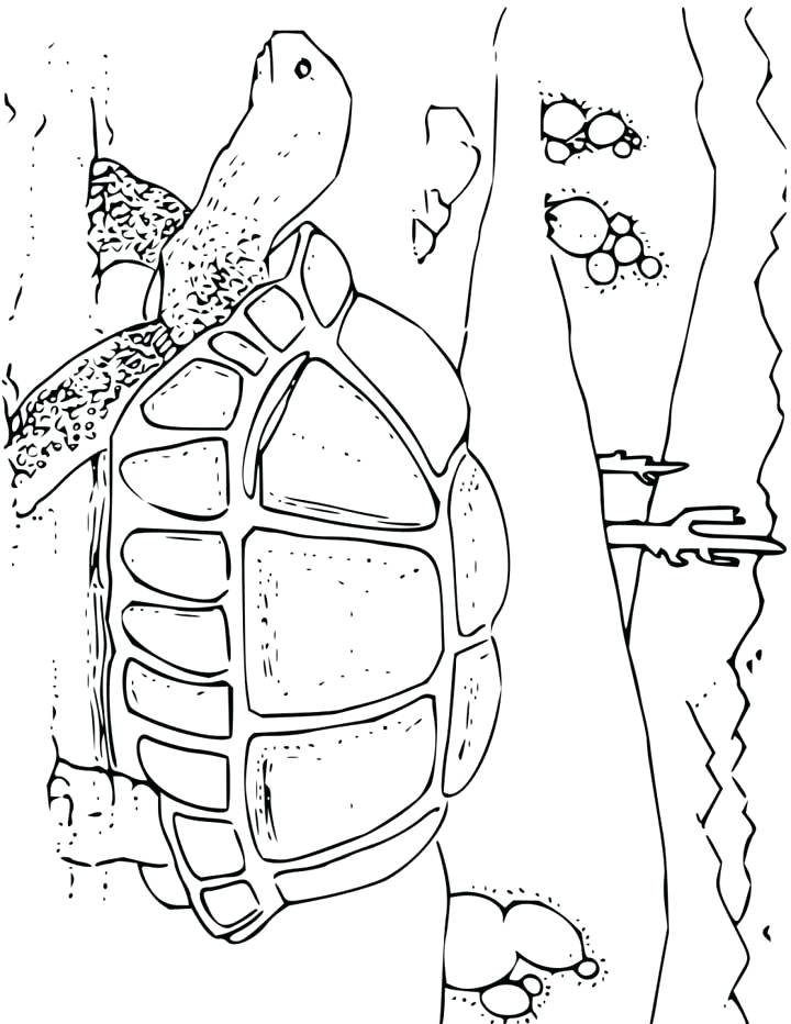 720x932 Tortoise Coloring Page Desert Tortoise Coloring Page Galapagos