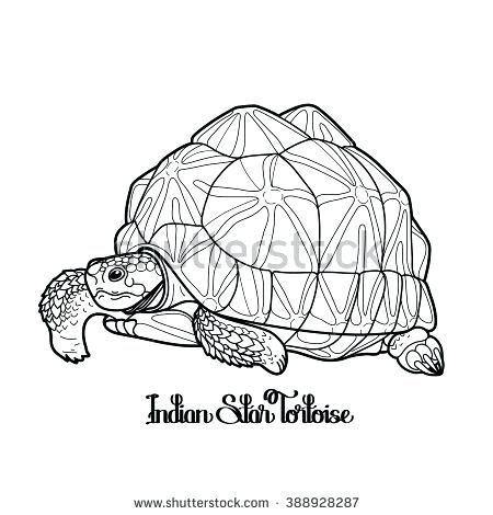 450x470 Tortoise Coloring Page Le Geochele Galapagos Tortoise Colouring