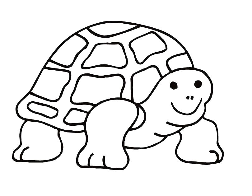 810x630 Tortoise Coloring Page Tortoise Coloring Page Galapagos Tortoise