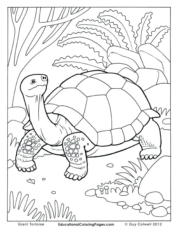 612x792 Tortoise Coloring Page Tortoise Coloring Pages Tortoise Colouring