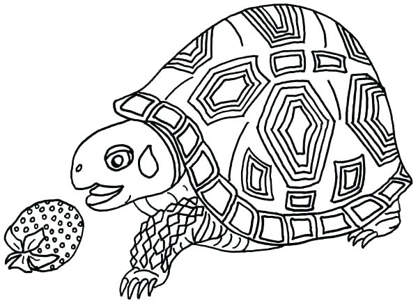 600x438 Hare Tortoise Coloring Pages Professional