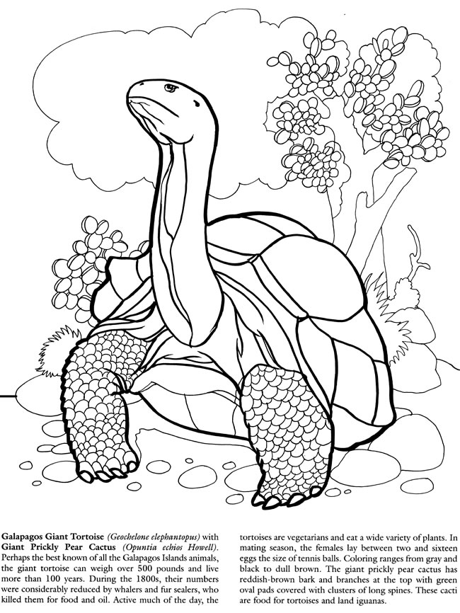 650x866 Galapagos Islands Coloring Book Dover Publications Coloring