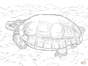 300x225 Realistic Galapagos Tortoise Download Coloring Pages