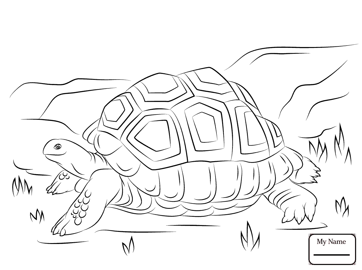 1224x913 Special Tortoise Coloring Page And The Hare