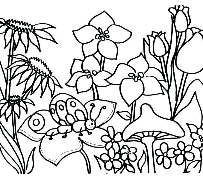 678x600 Garden Coloring Pages Flower Garden Coloring Page Fancy Flower