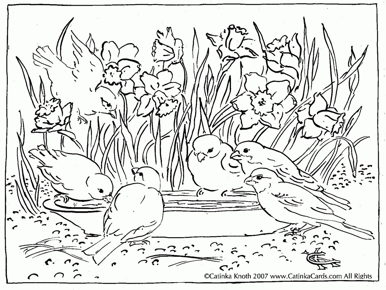 1280x961 Hard Garden Coloring Pages New Spring Birds Adult