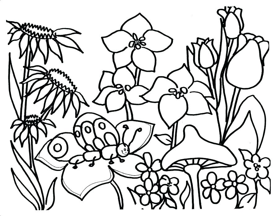 882x700 Garden Colouring Pages For Adults
