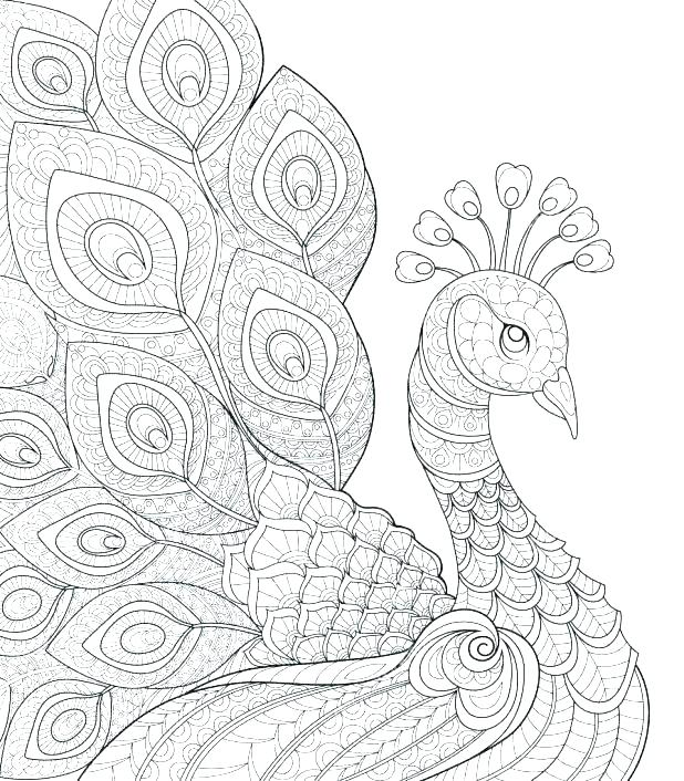 618x706 Coloring Peacock Peacock Coloring Pages Peacock Coloring Pictures