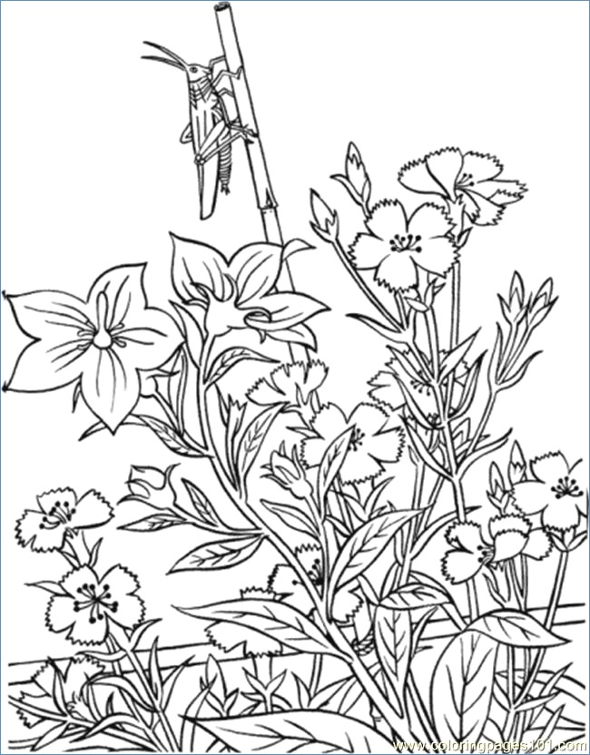 650x832 Flower Garden Coloring Pages Printable