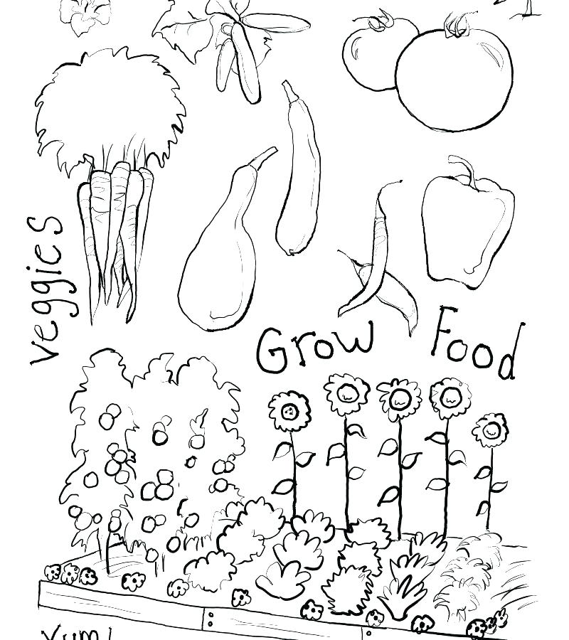 800x900 Garden Coloring Page Vegetable Garden Coloring Pages Best Garden
