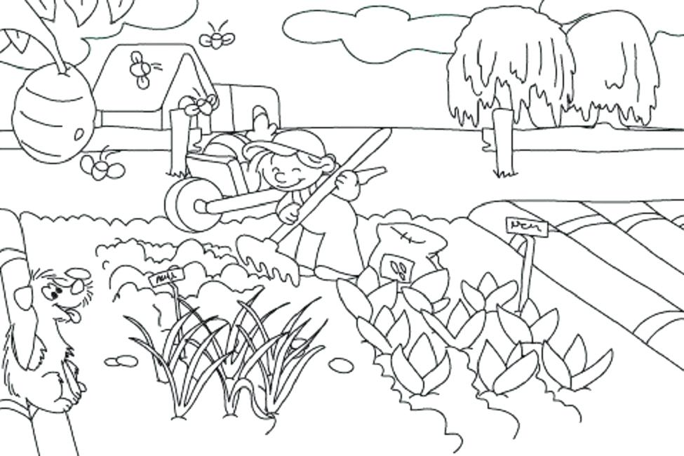 975x650 Vegetable Garden Coloring Pages