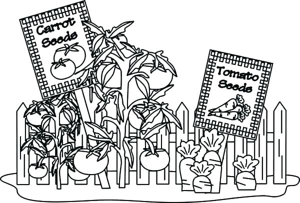 600x407 Garden Coloring Pages Coloring Pages For Kids Man Takes Care