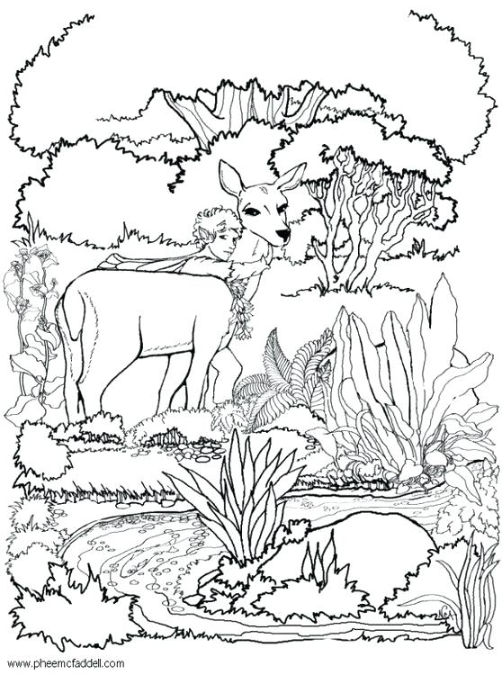 558x750 Fairy Garden Coloring Pages Fairy Garden Coloring Page