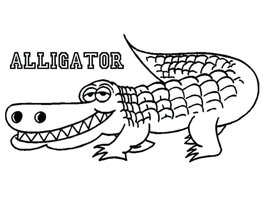 878x659 Alligator Coloring Pages Alligator Coloring Pictures Alligator