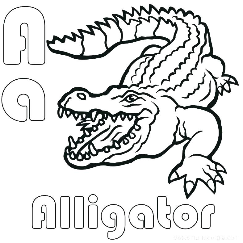 Gator Coloring Page at GetDrawings.com | Free for personal ...