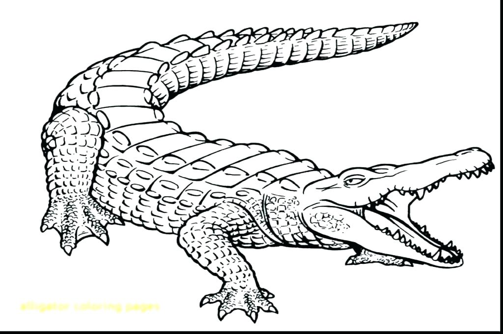 1024x681 Alligator Coloring Pages Coloring Page Alligator Coloring
