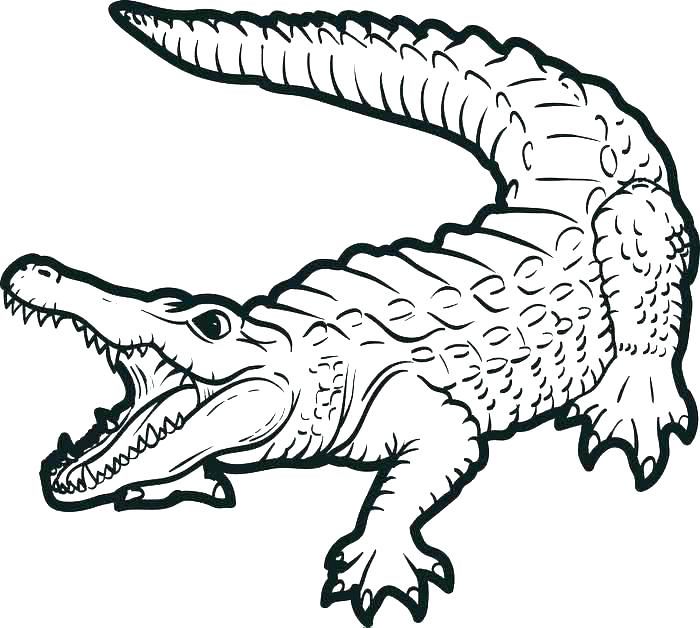 700x628 Alligator Coloring Pages Plus Alligator Therapy Coloring Pages
