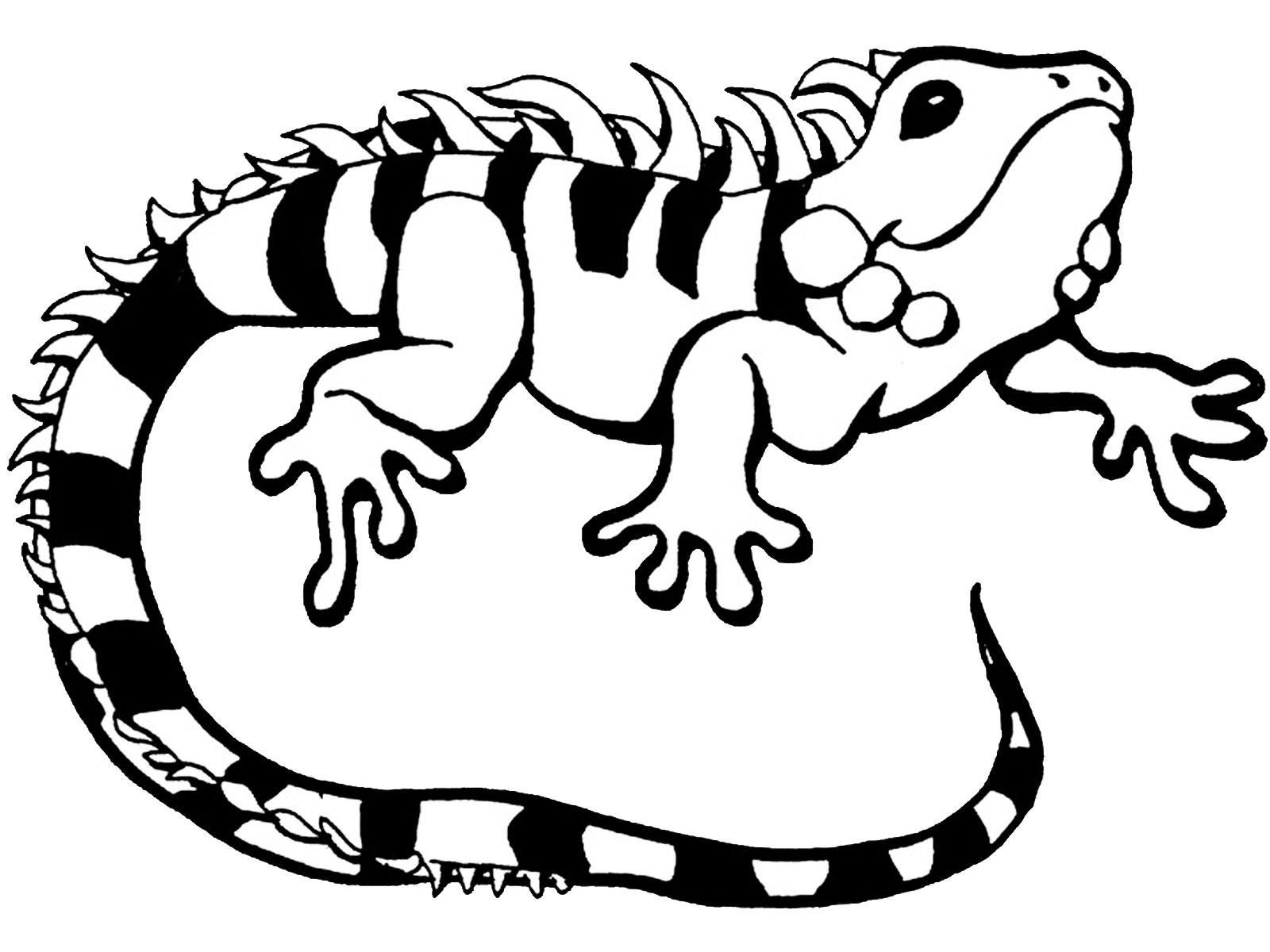 1600x1200 Fabulous Gecko Coloring Pages Almost Unique Article Cute Iguana
