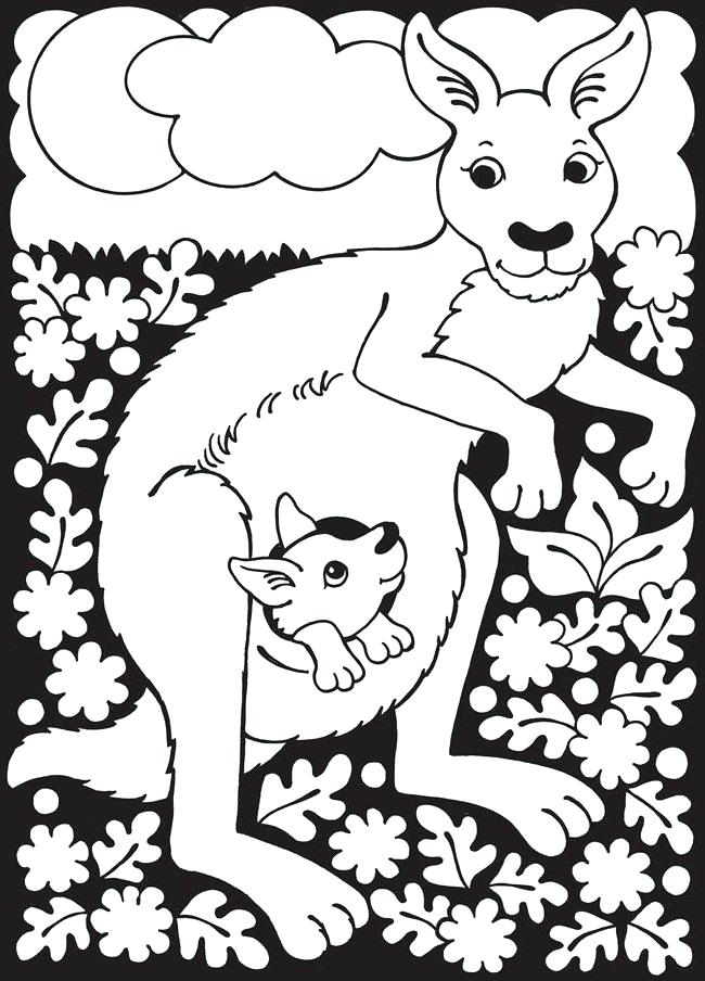 650x904 Geography Coloring Pages Kangaroo Page Unit Terms Coloring