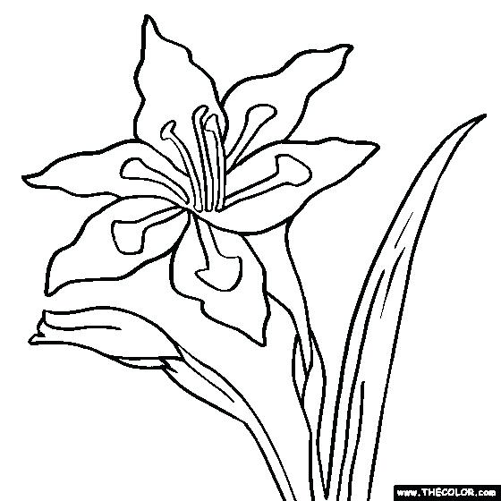 Free Coloring Pages: Georgia O Keeffe Coloring Pages | 560x560