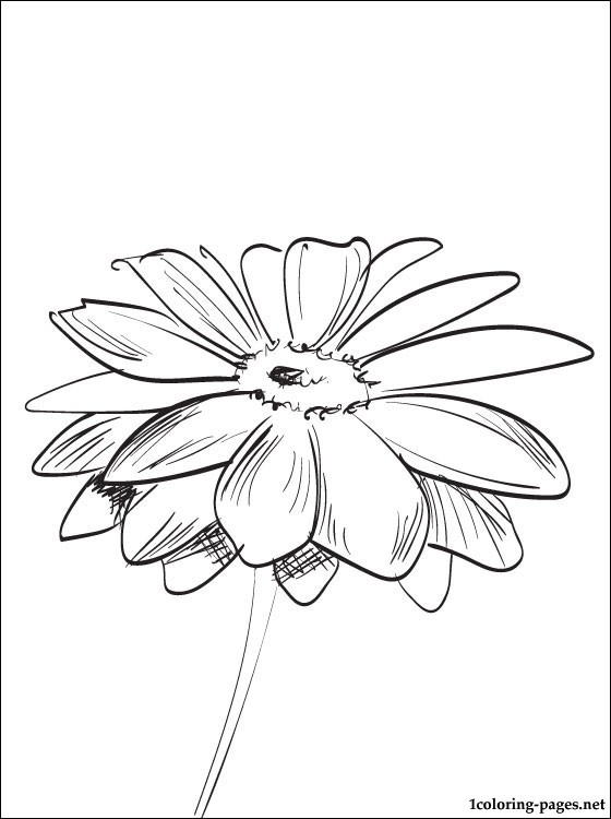 560x750 Coloring Page Gerbera Coloring Pages