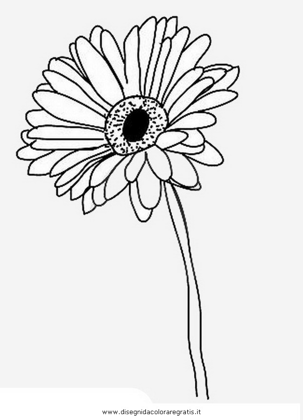 621x860 Gerber Daisy Coloring Pages