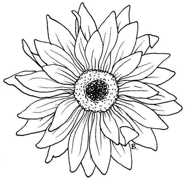 600x589 Beccy's Ort Sonnenblume Gerbera Zeichnen Lernen
