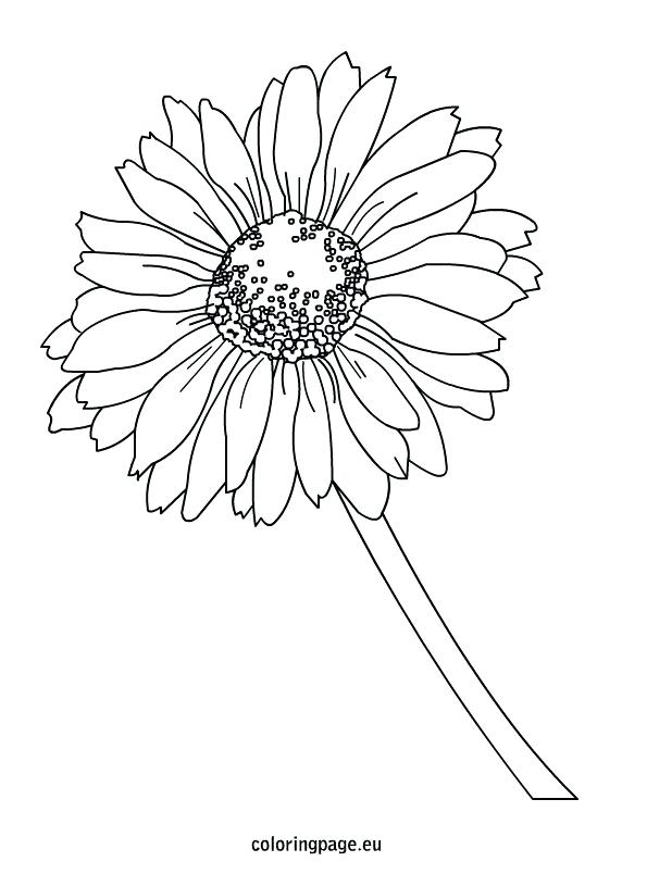 595x804 Coloring Daisy Coloring Page Flower Pages Friends Sheets Daisy