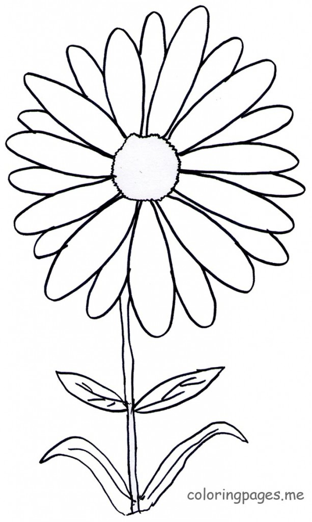 613x1024 Coloring Pages Daisy Intended For Decor