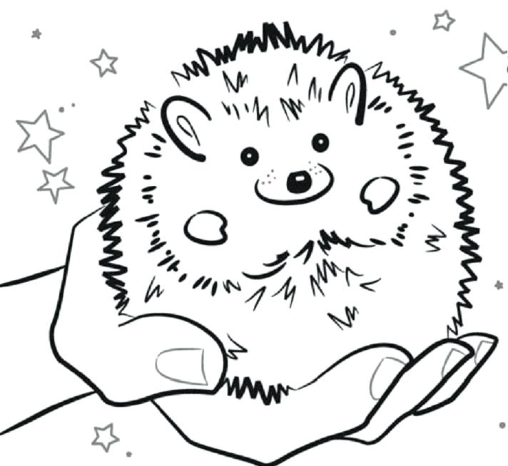 712x654 Gerbil Coloring Pages Gerbil Coloring And Printable Page Gerbil