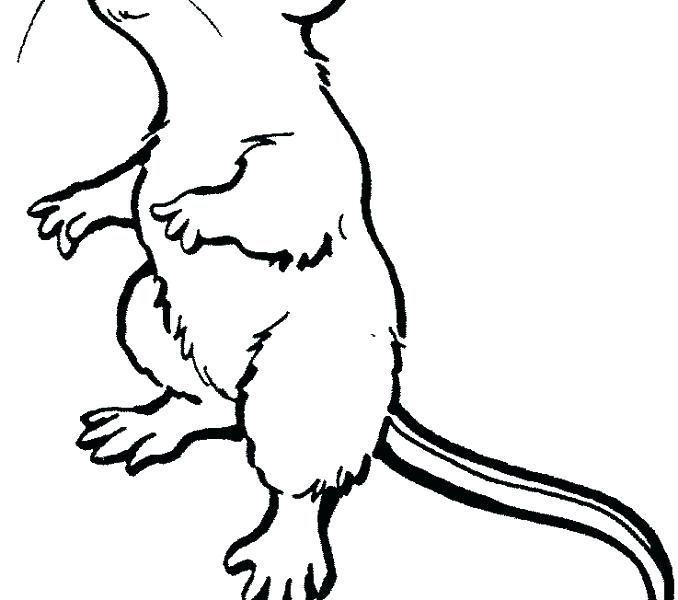 678x600 Gerbil Coloring Pages Rat Coloring Page Gerbil Coloring Page Lab