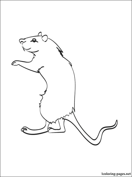 560x750 Gerbil Coloring Pages