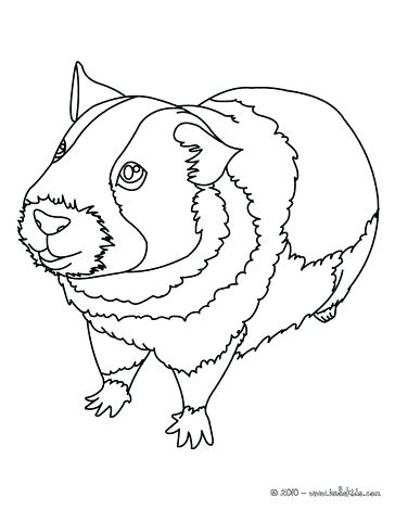 364x470 Guinea Pig Coloring Page Gerbil Coloring Pages Free Guinea Pig