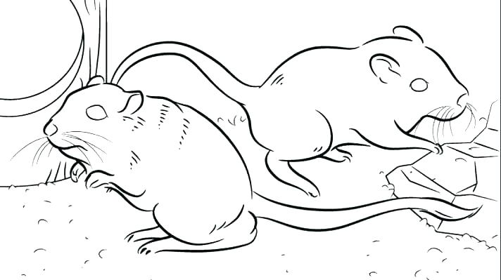 712x399 Rat Coloring Pages Rat Coloring Pages Rat Coloring Pages Rat