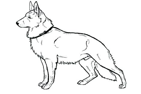 470x313 German Coloring Pages Drawn Shepherd Coloring Page Pencil