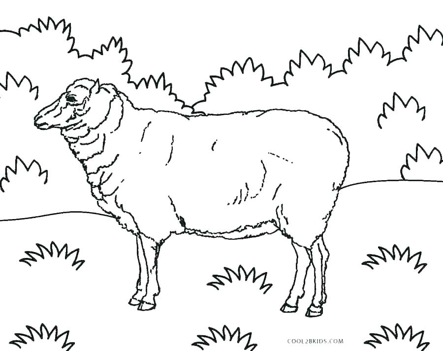 900x713 Shepherd Coloring Page Our Shepherd Coloring Page German Shepherd