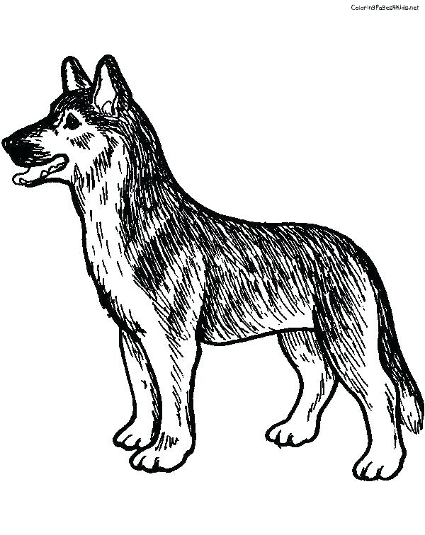 600x756 German Shepherd Coloring Page Shepherd Puppy Coloring Pages Stock