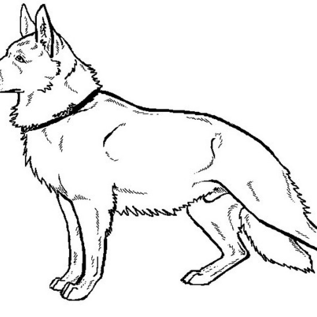 1024x1024 Drawn German Shepherd Coloring Page Pencil And In Color Drawn