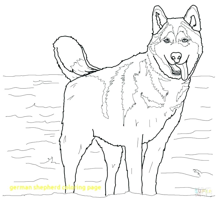 900x834 German Shepherd Coloring Pages