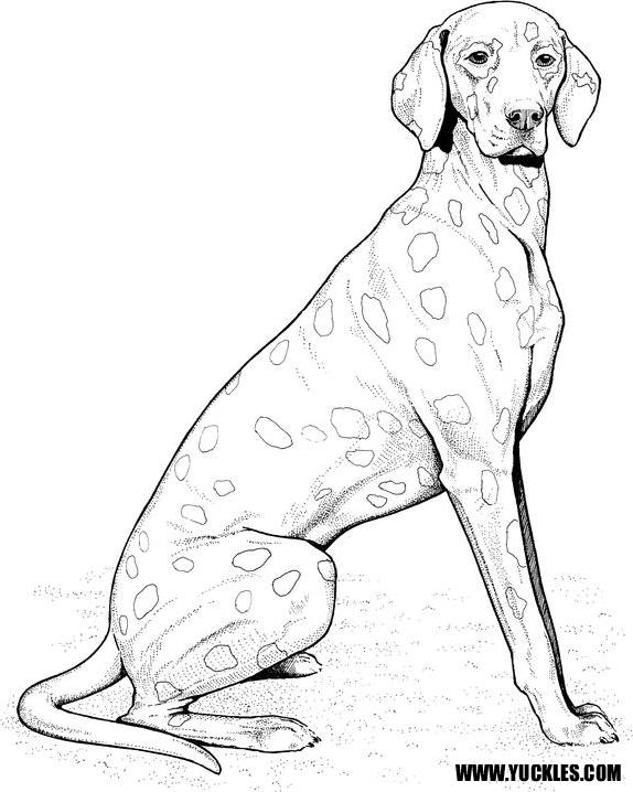 574x718 Dalmatian Coloring Page