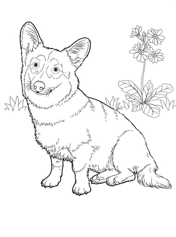 736x990 De Favorite Dog Colouring Pages Bilderna