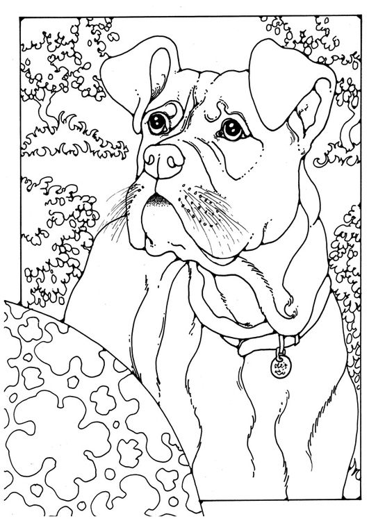 531x750 Best Dog Coloring Pages Images On Coloring Books