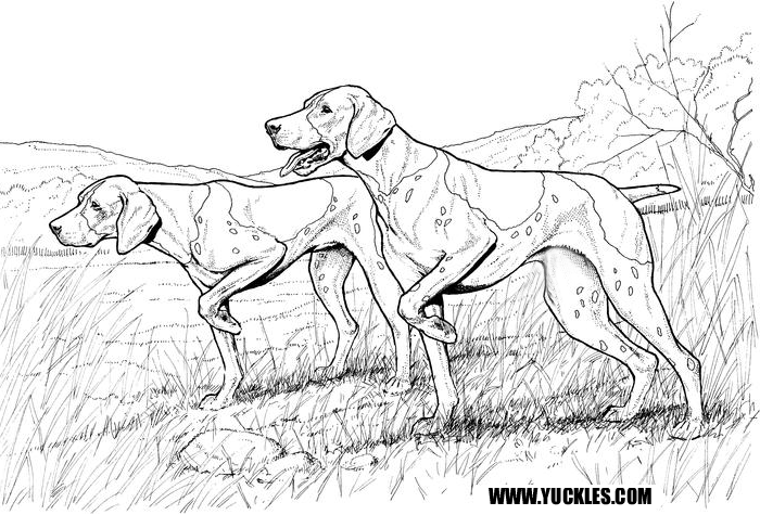 700x475 German Shorthaired Pointer Coloring Page