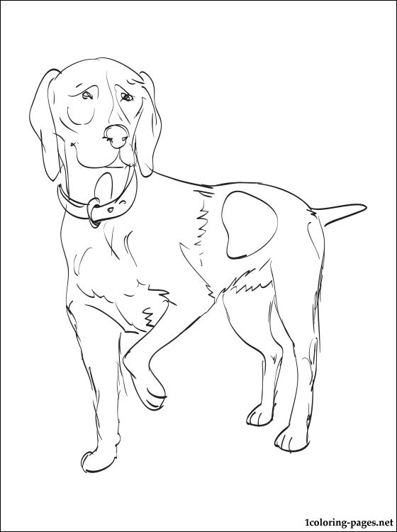 560x750 German Shorthaired Pointer Coloring Page Coloring Pages
