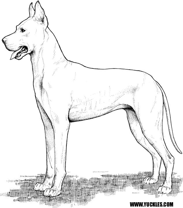 634x720 Great Dane Coloring Page