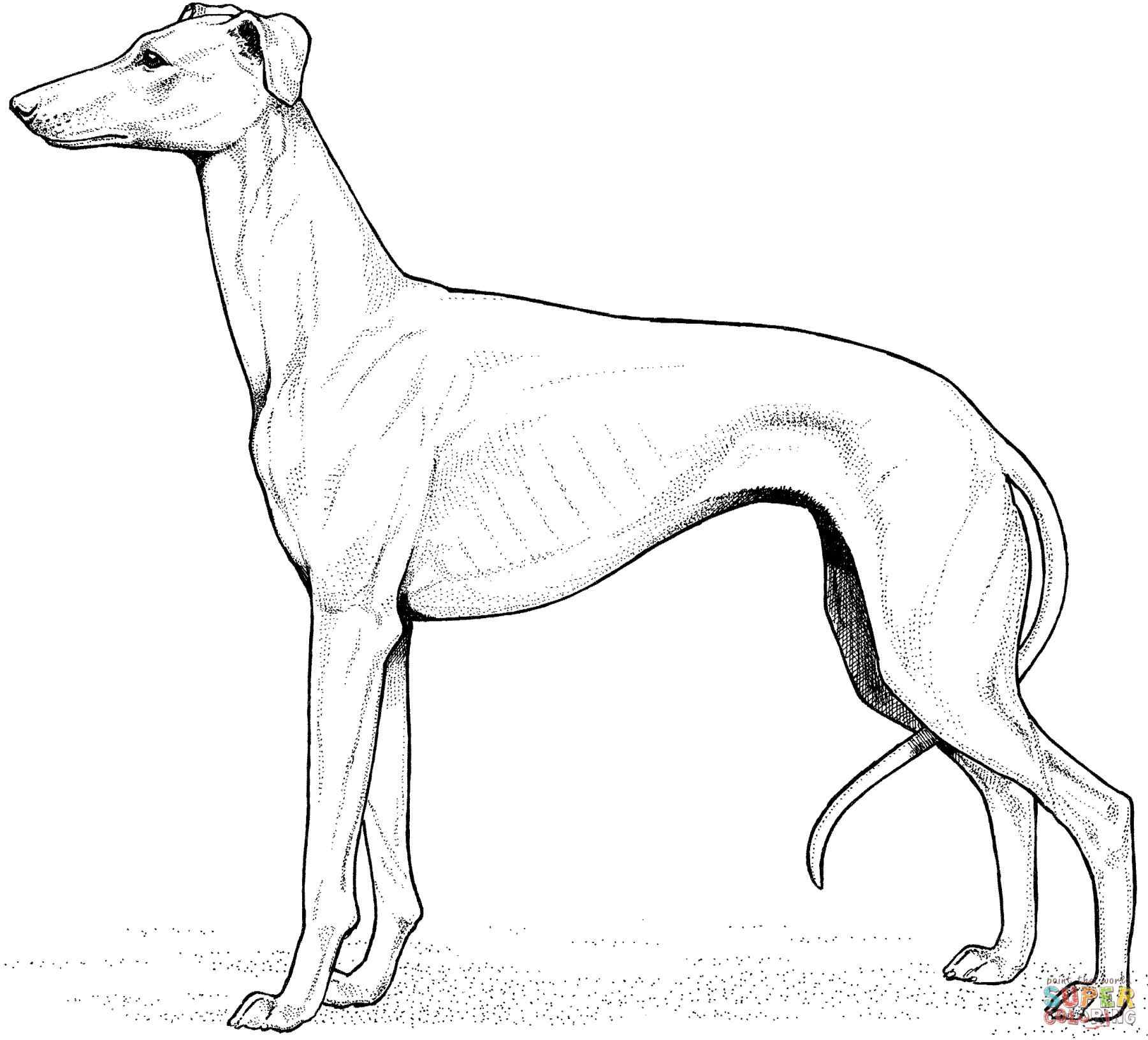 1801x1632 Bull Terrier Page Free Printable Candy Cane Print Candy Realistic