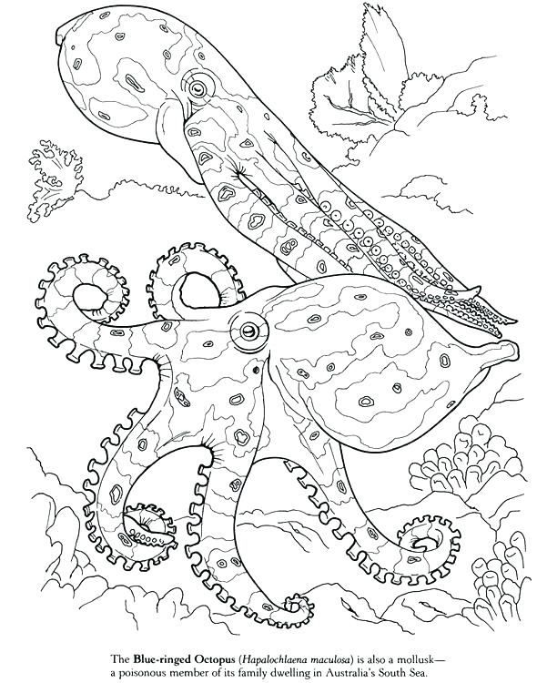 601x750 Squid Coloring Page Giant Squid Coloring Pages Pin Drawn Squid Sea