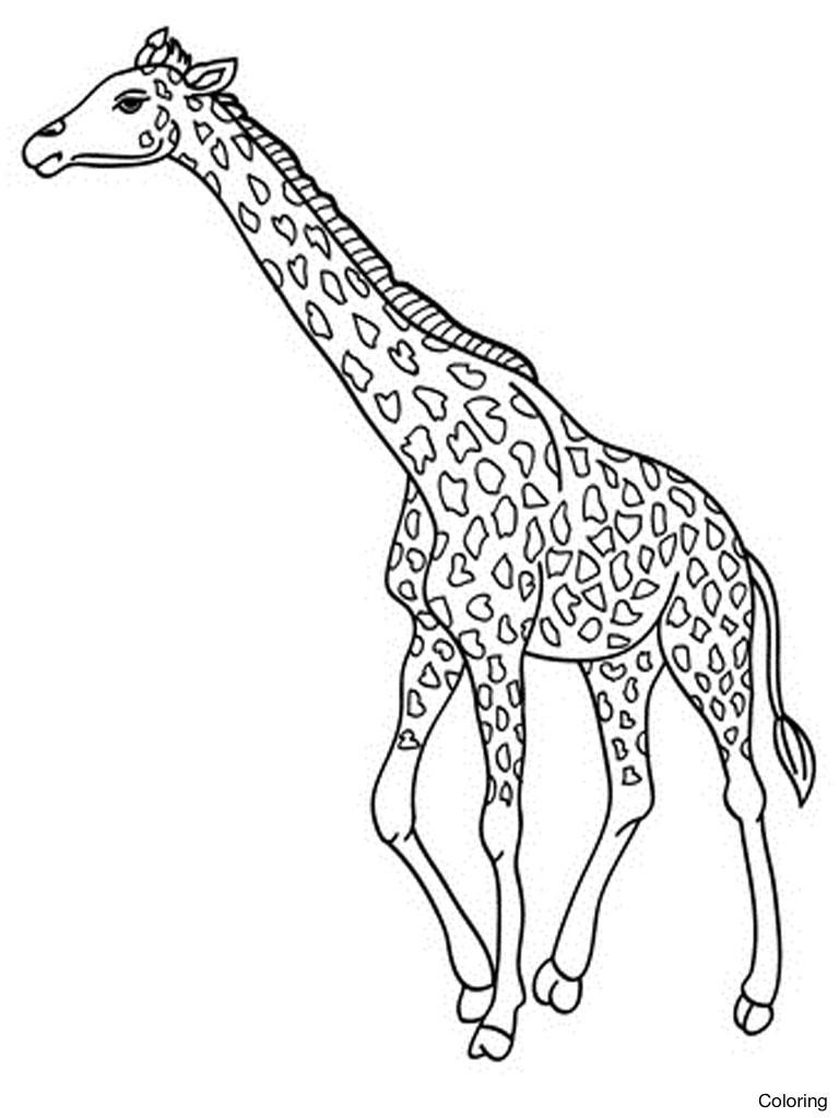 768x1024 Giraffe Coloring Page Church Crafts Beautiful Sheets